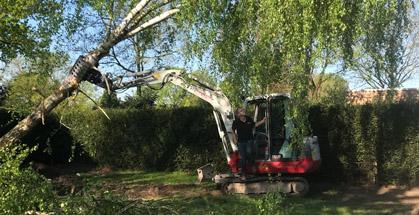 bomen rooien - joost de vries